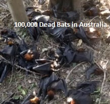 dead-bats-australia