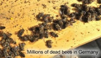 dead-bees-germany