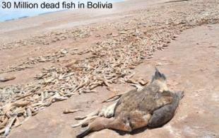 dead-fish-bolivia
