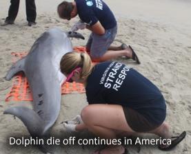 dolphin-die-off