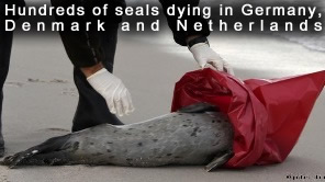 seals-dead